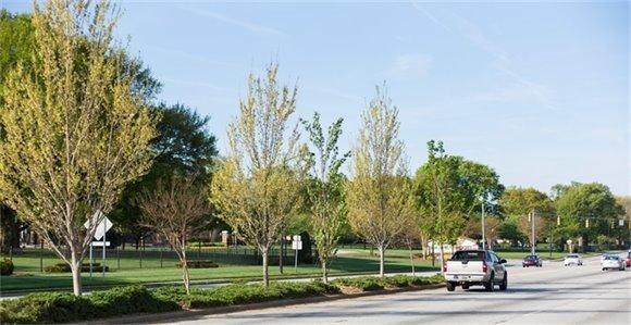trees along roadway