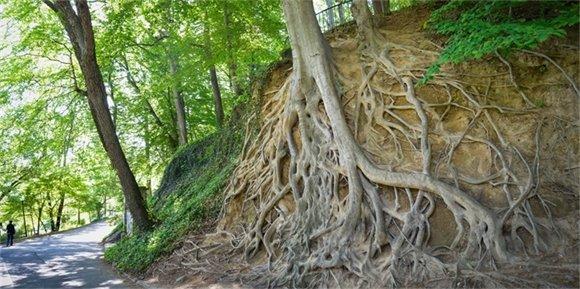 Photo of trees near Falls Park