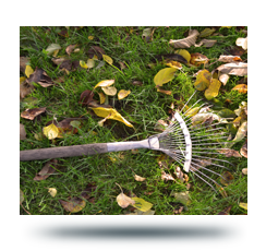 rake laying in yard