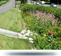 photo of a rain garden installed in a ditch area